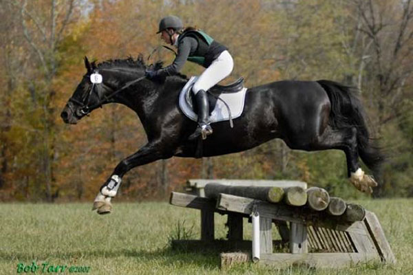 100 day stallion test cross country