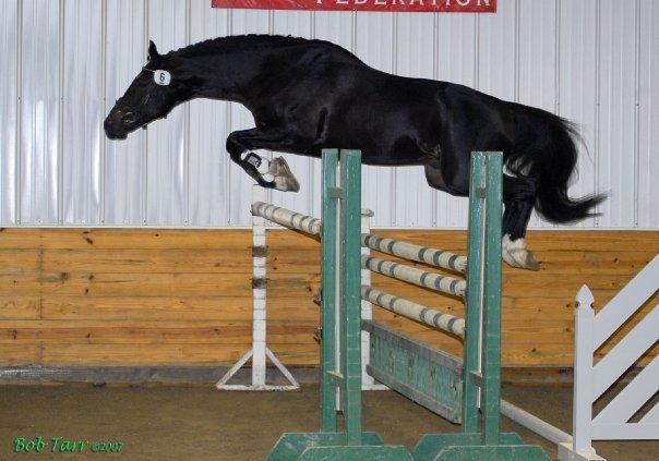 100 day stallion test