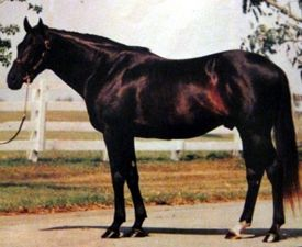 Gatsby's dam sire, Seattle Song