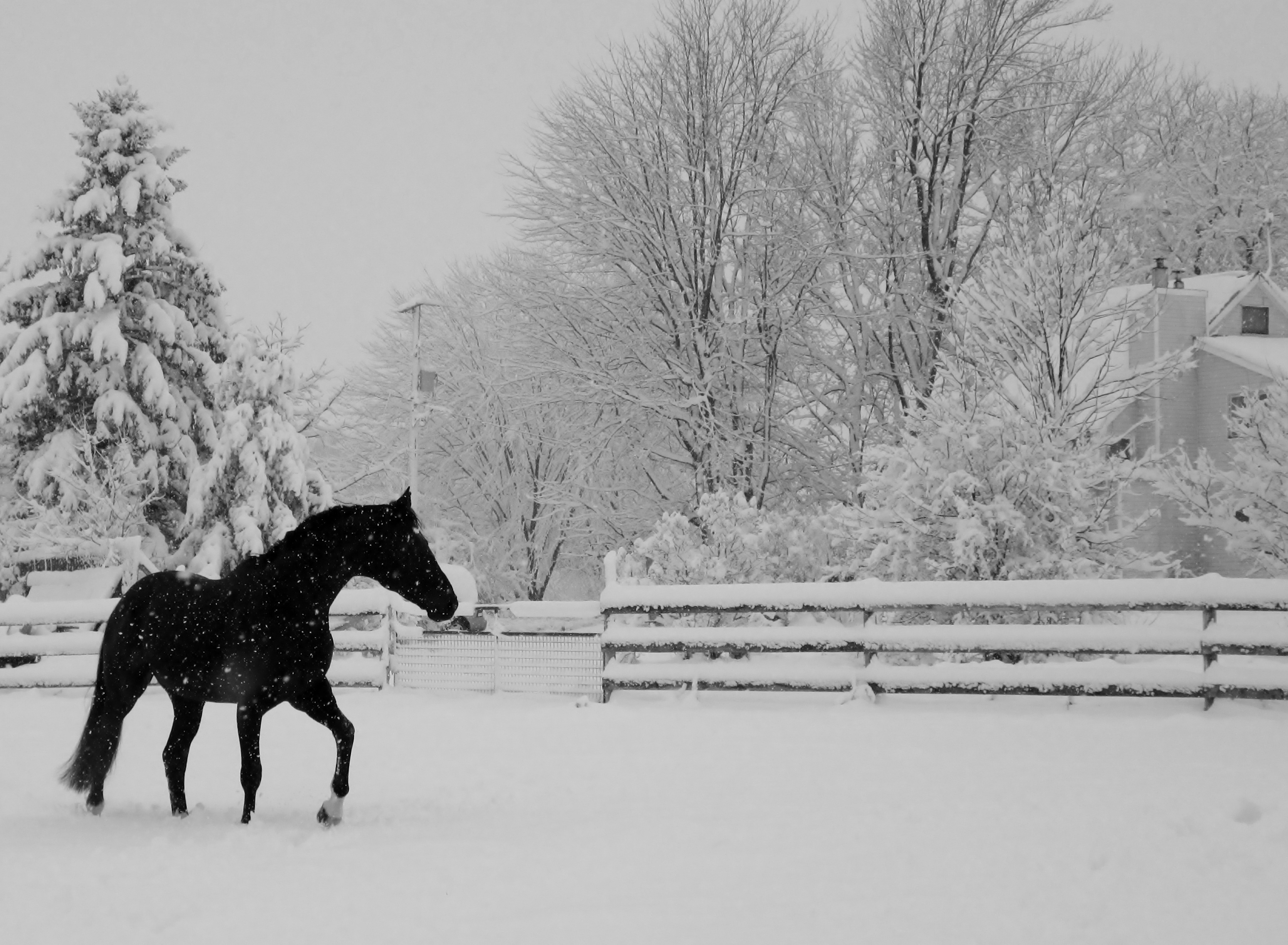 Gatsby at home in the snow